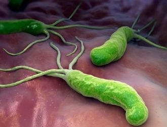 Helicobacter pylori — спиралевидная грамотрицательная бактерия, которая инфицирует различные области желудка и двенадцатиперстной кишки