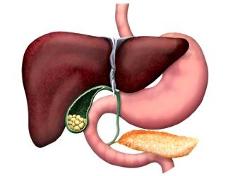 Гринтерол - помощник вашей печени и желчного пузыря