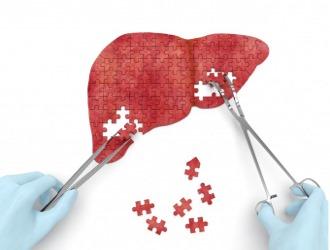 Сирепар восстанавливает поврежденные гепатоциты