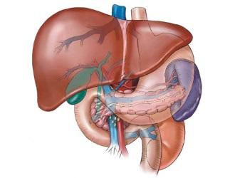 Урсодез часто назначается в комплексе с другими препаратами